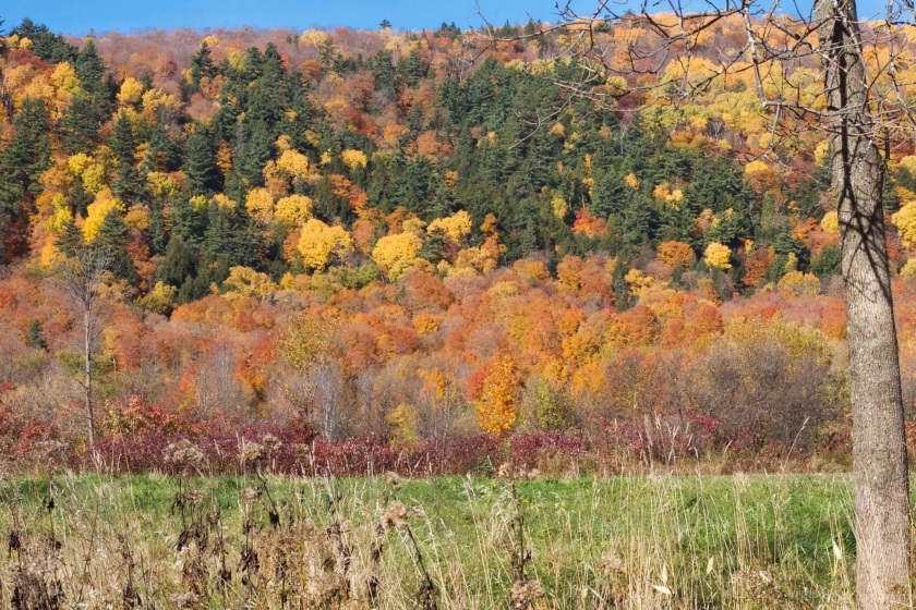 AutumnTrees.jpg